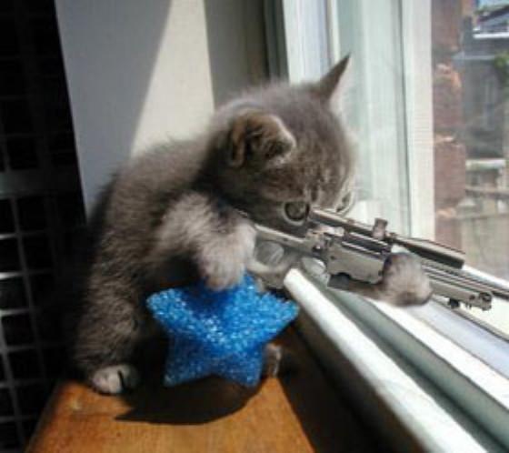 el-gato-de-scorpio.jpg